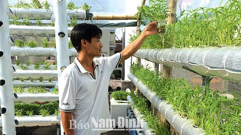 Mô hình trồng rau bằng phương pháp thủy canh của anh Trần Tuấn Anh, phường Lộc Hạ (TP Nam Định).