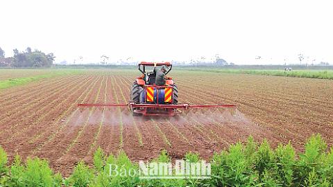 Chăm bón cây trồng theo công nghệ cao tại Cty CP Phát triển nông nghiệp Hòa Phát, xã Trực Chính. Ảnh: Do cơ sở cung cấp.